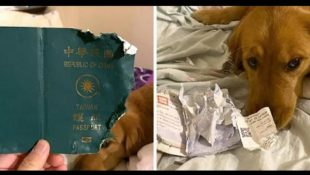 dog eats passport and save owner life
