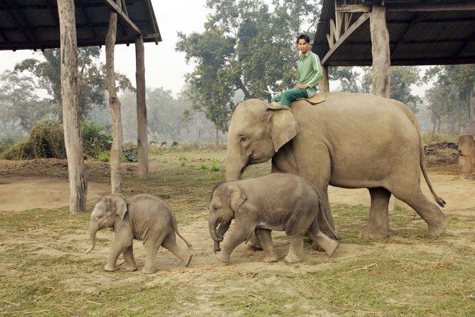 chitwan elephant photo