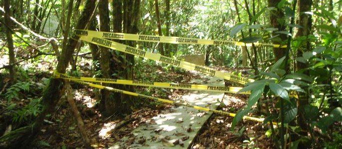 crime in jungle