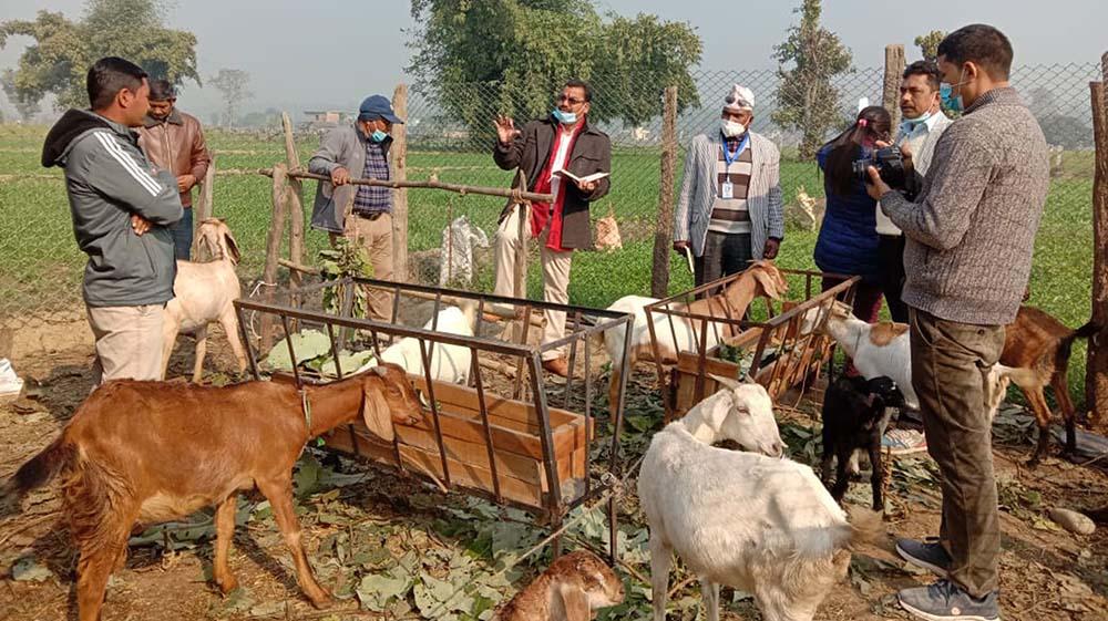 Goat farming sudurpashim2020 12 29 02 12 41
