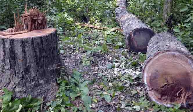 Tree Rukha