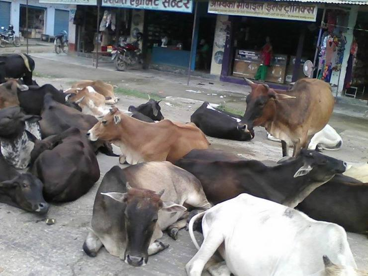 chhada chaupaya