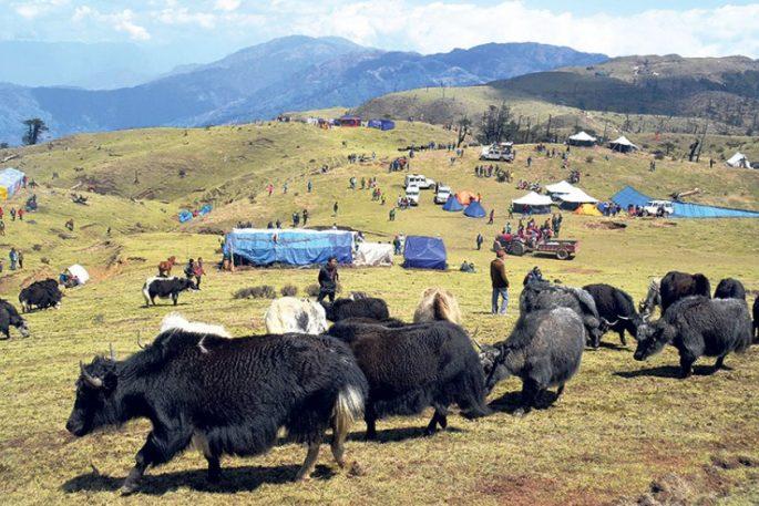 Chauri Yak Festival